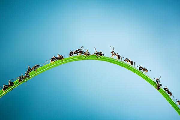 ants6x4